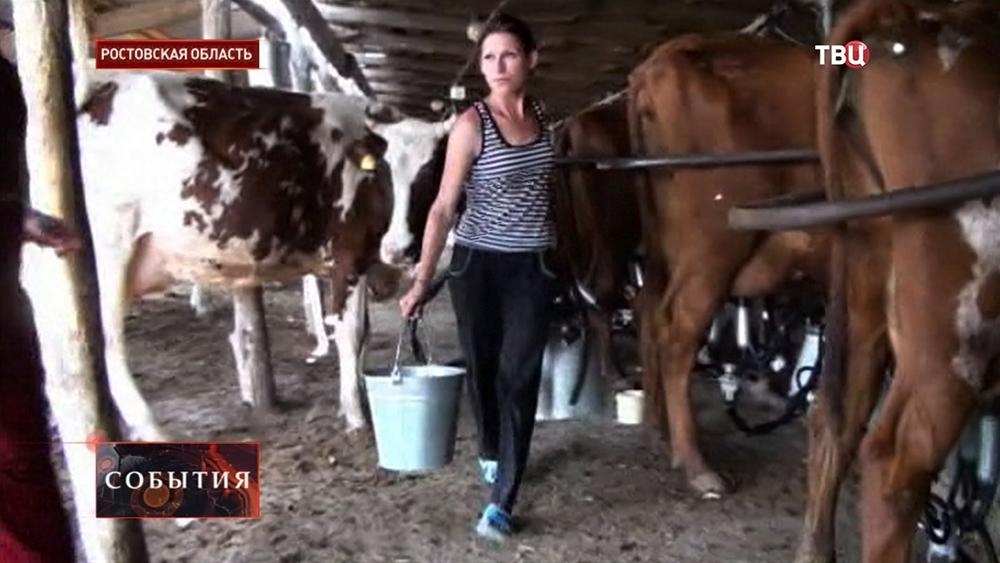 Молочная ферма в Ростовской области