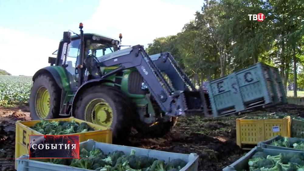 Европейское фермерское хозяйство