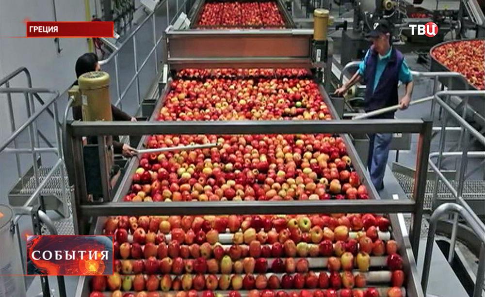 Урожай яблок в Греции