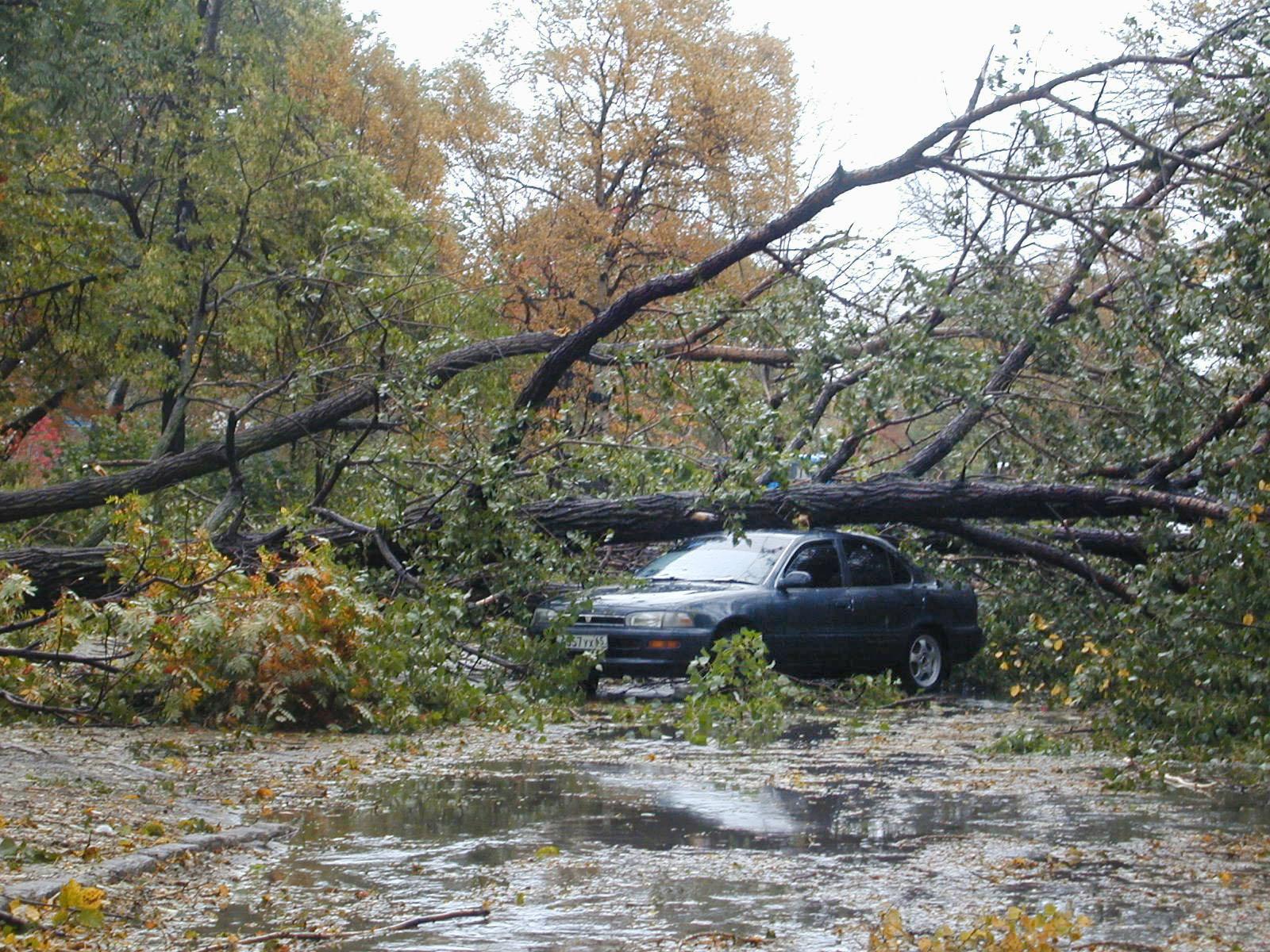 Поваленное дерево от сильного порыва ветра