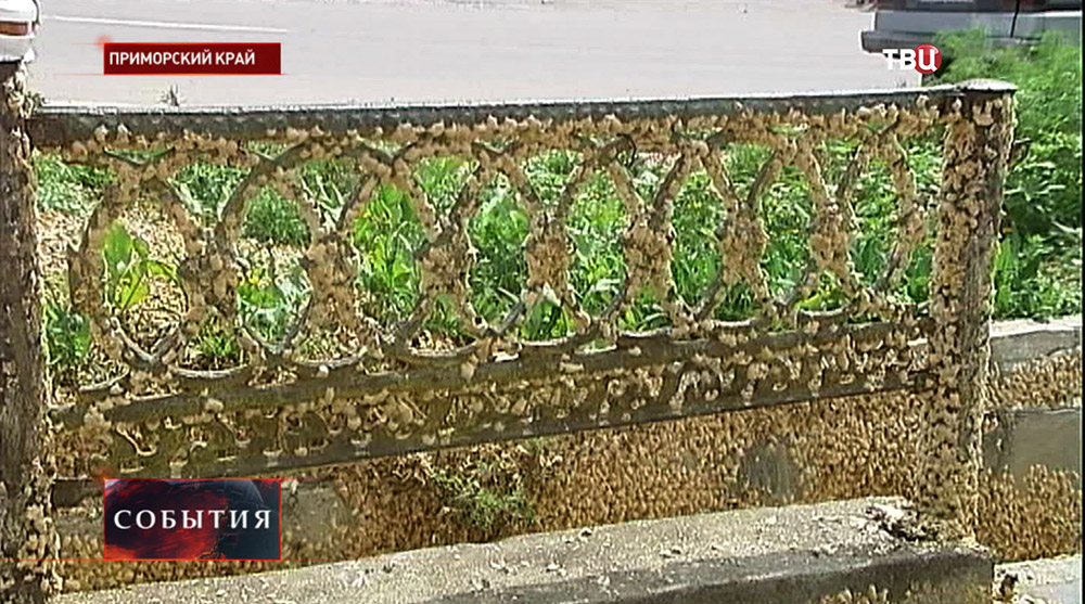"""""""Нашествие"""" шелкопряда в Приморском крае"""