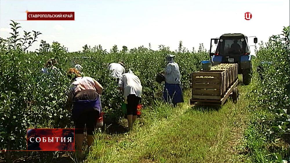 Фермерское хозяйство в Ставропольском крае