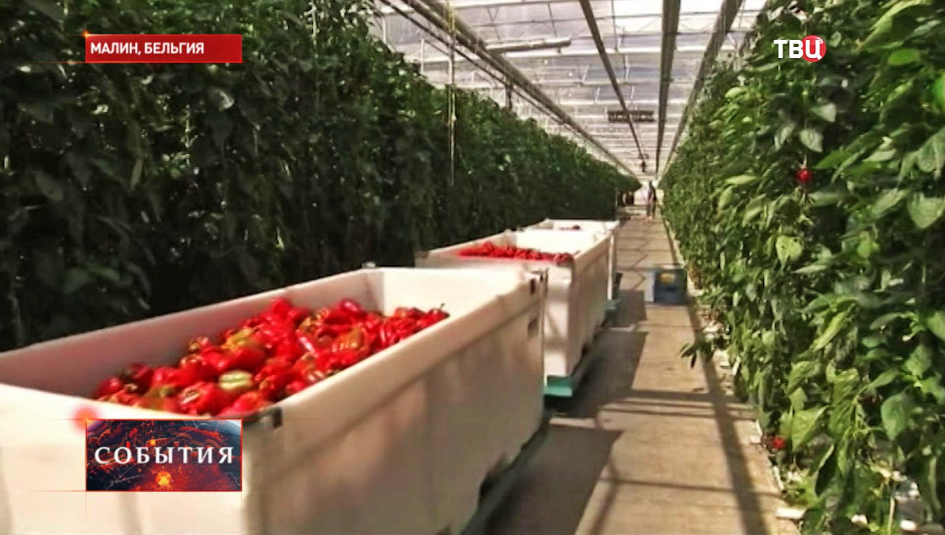 Сбор урожая в Бельгии