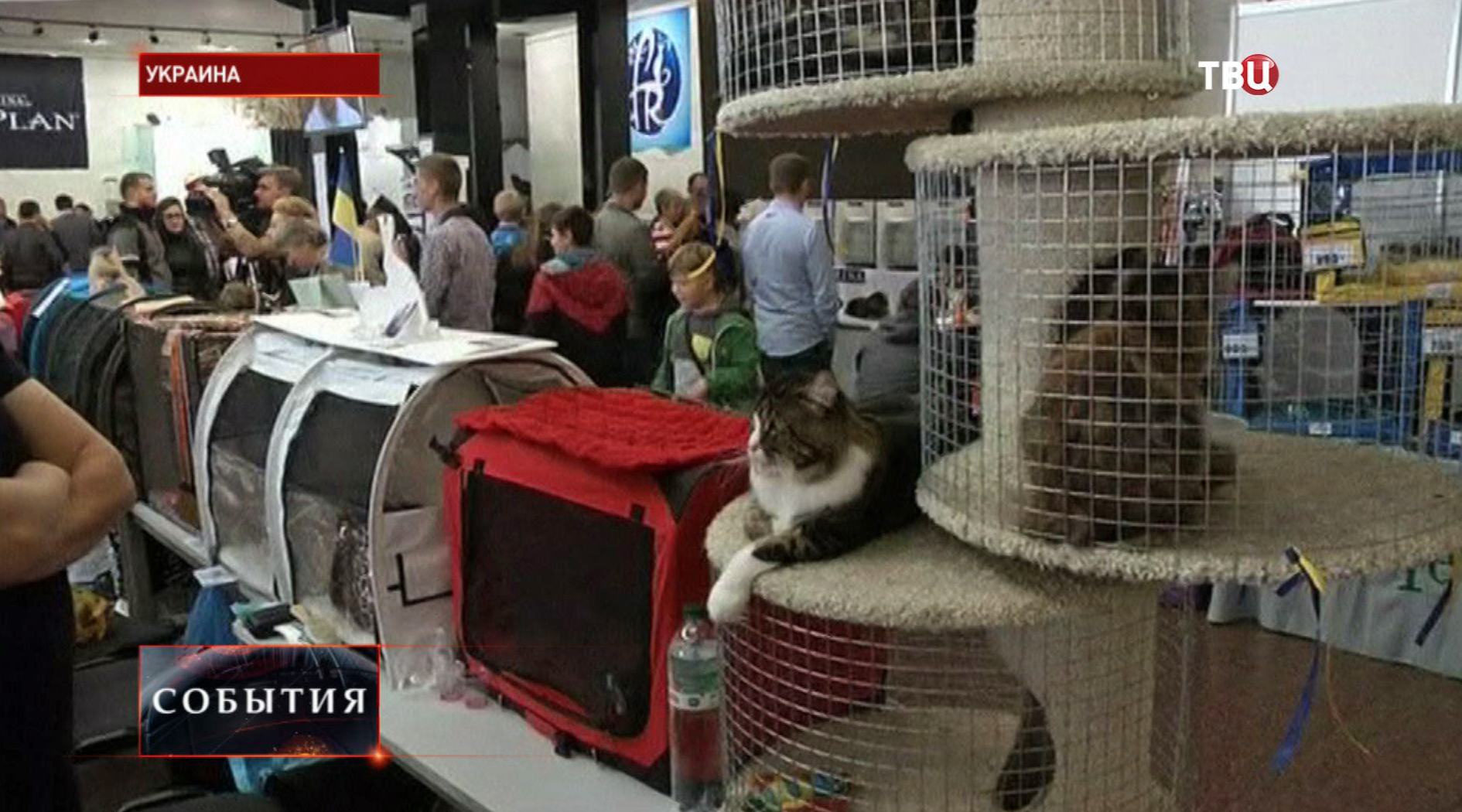Благотворительная ярмарка кошек