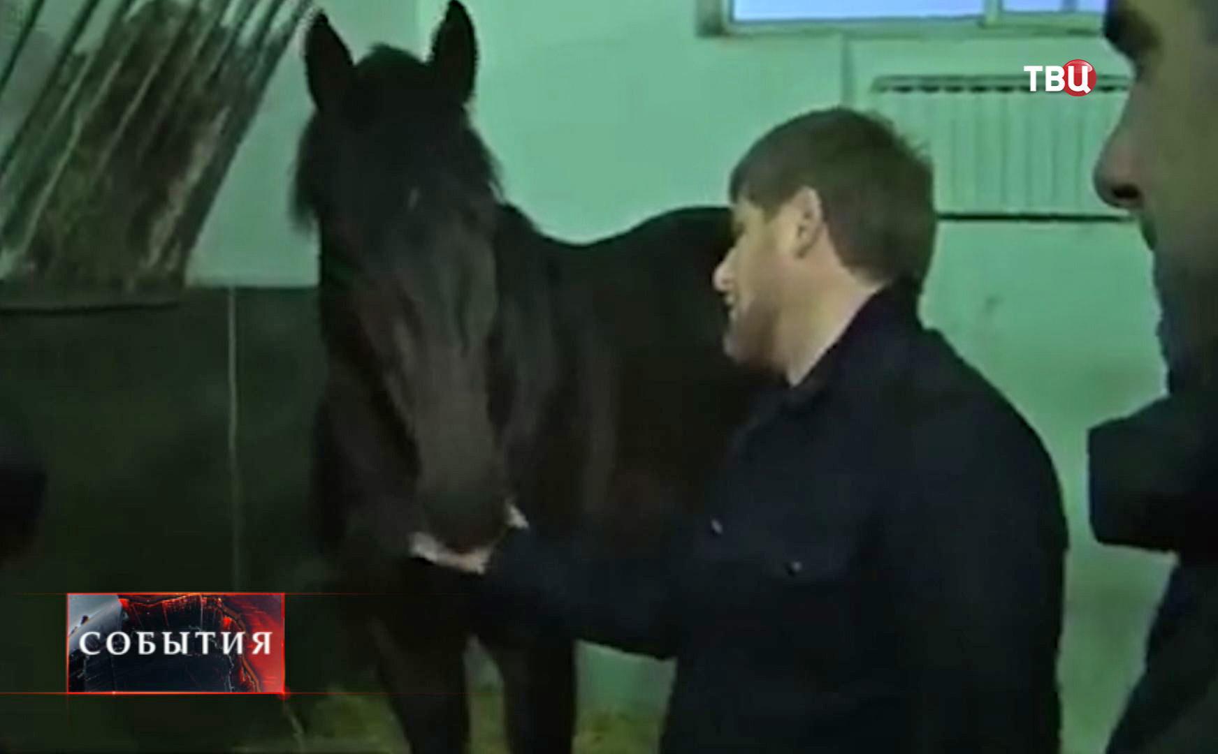 Глава Чечни Рамзан Кадыров с своей лошадью