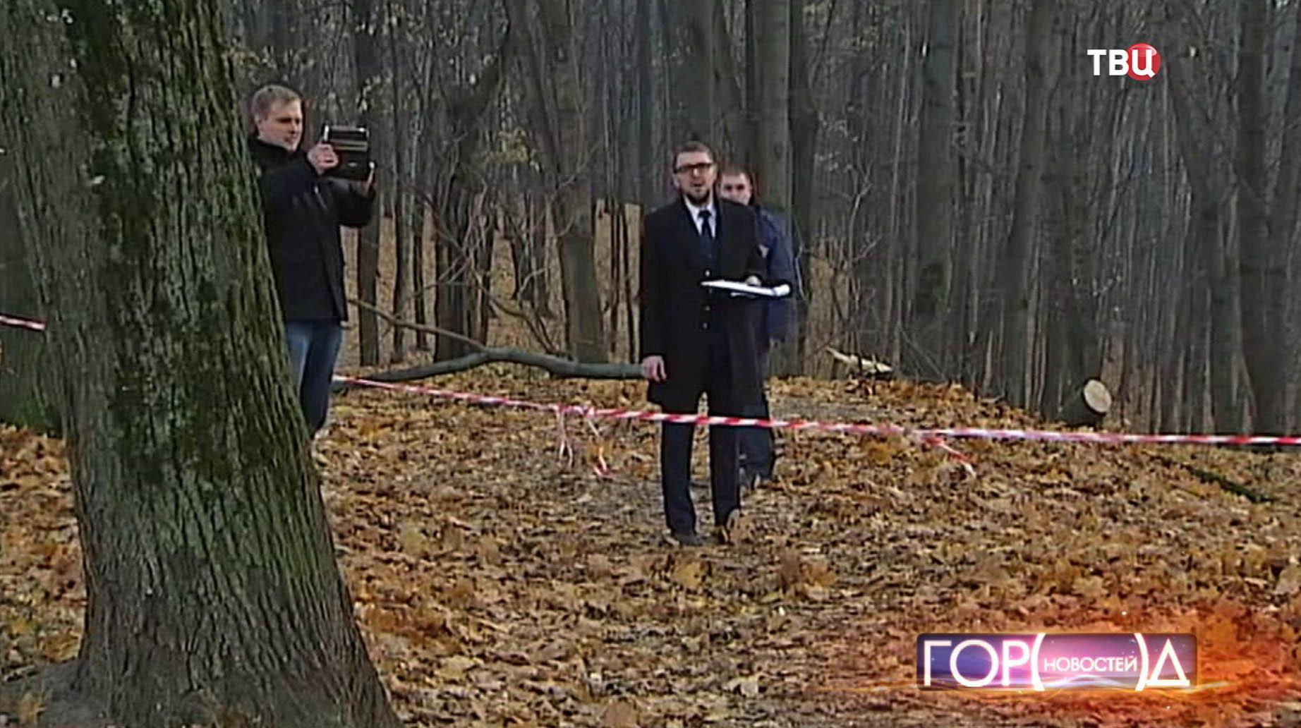 Место падения дерева