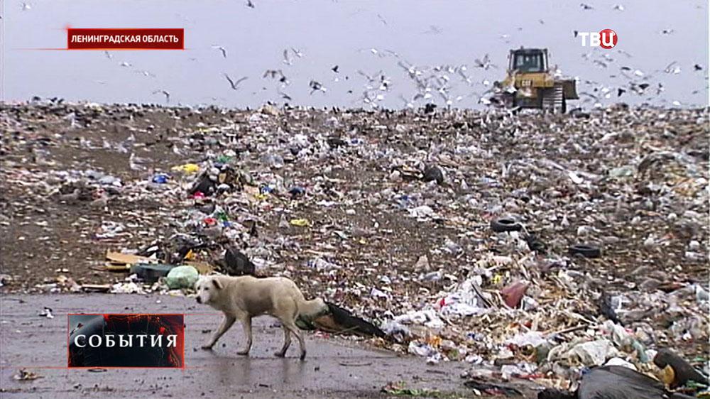 Мусорный полигон в Ленинградской области