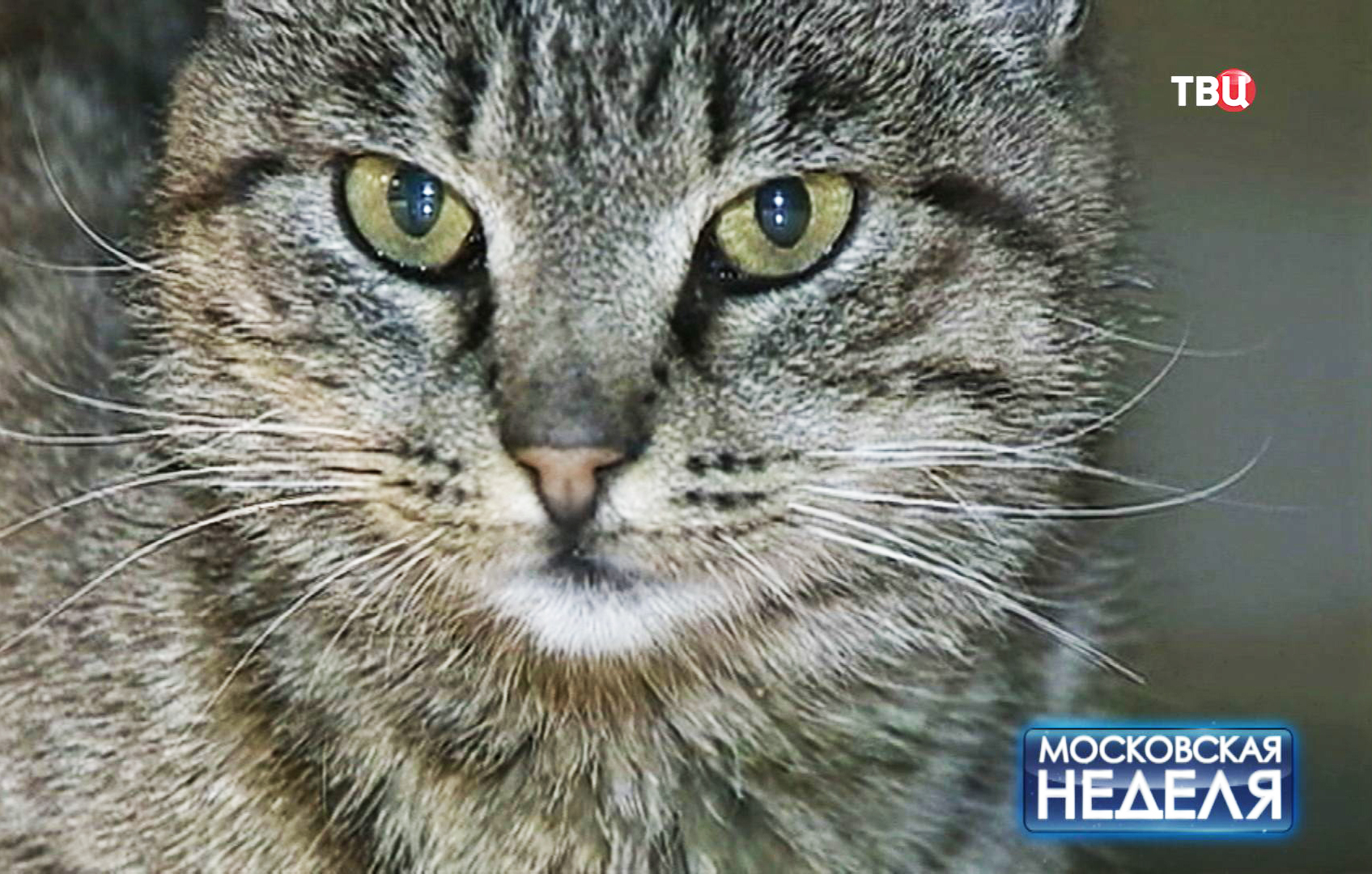 Кошка Матроска
