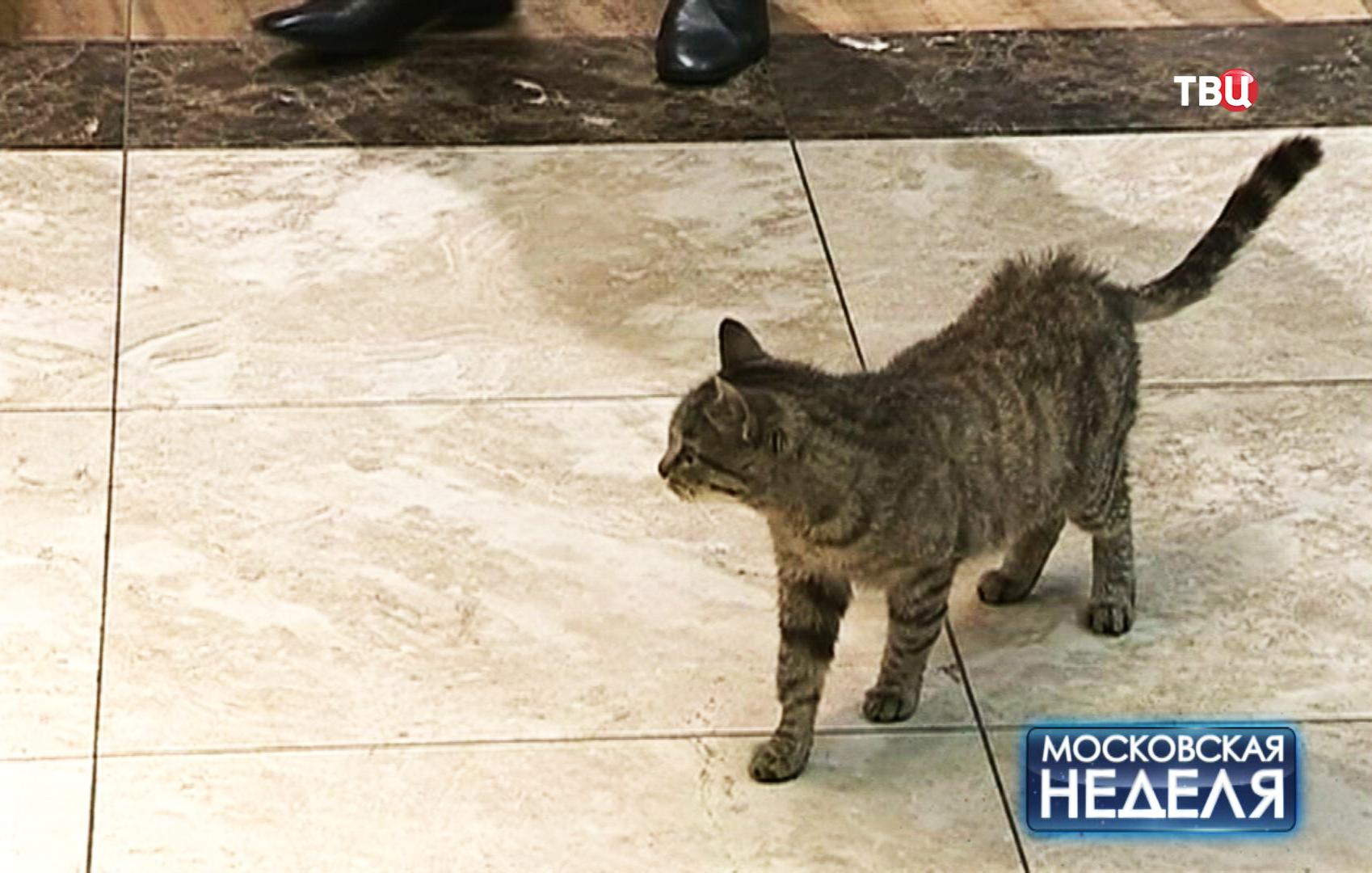 Кошка-гурман