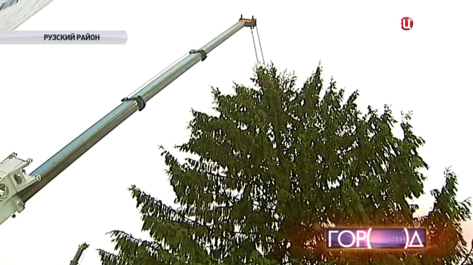 Коммунальщики срезают главную новогоднюю ёлку страны