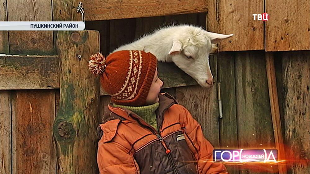 Коза в фермерском хозяйстве