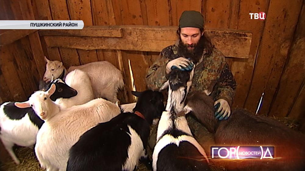 Фермер с козами