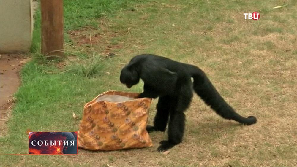 Обитатели зоопарка получили рождественские подарки