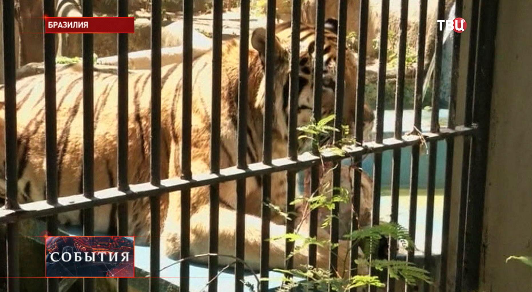 Зоопарк в Бразилии