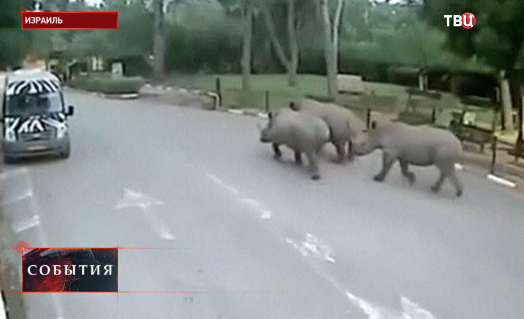 Сбежавшие носороги в Израиле