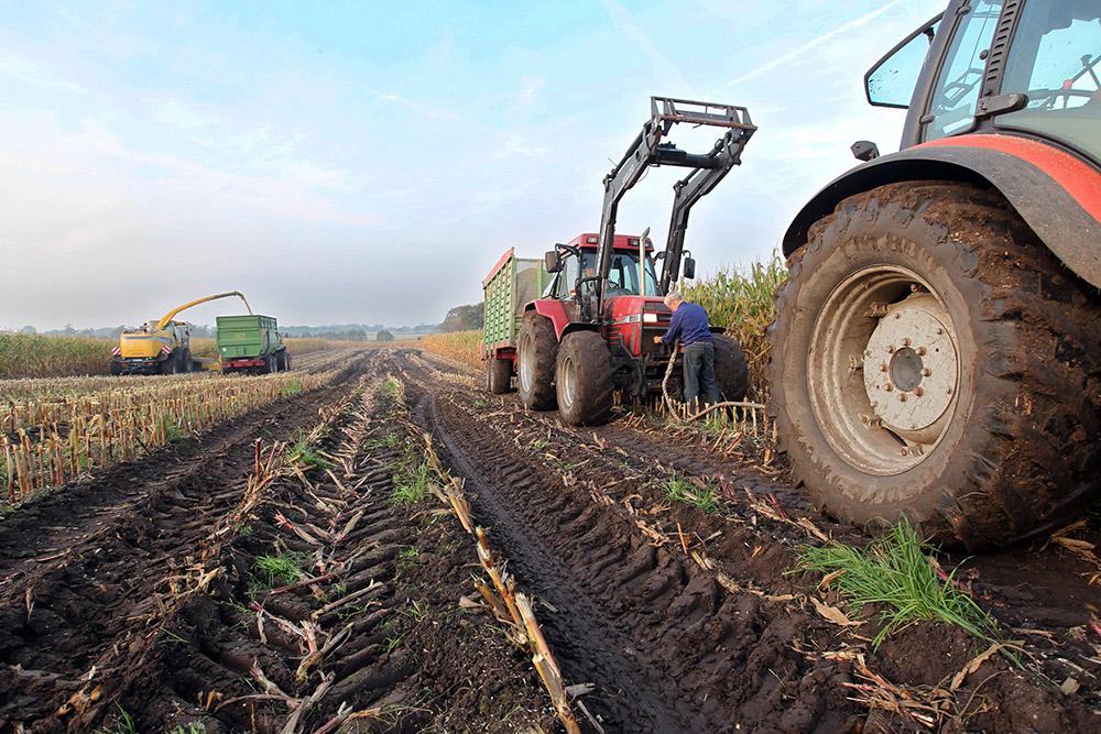 Фермеры собирают урожай