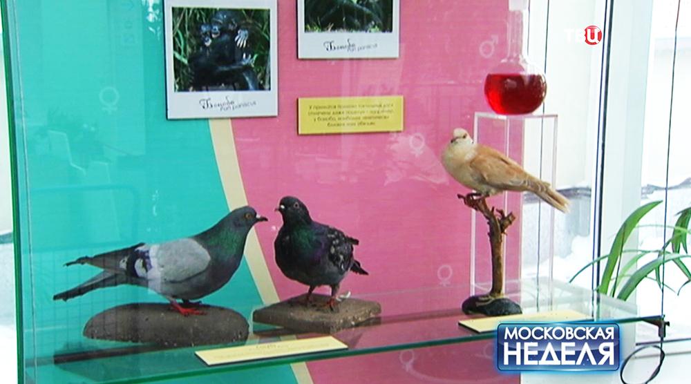 """Выставка """"Химия любви"""" в Дарвиновском музее"""