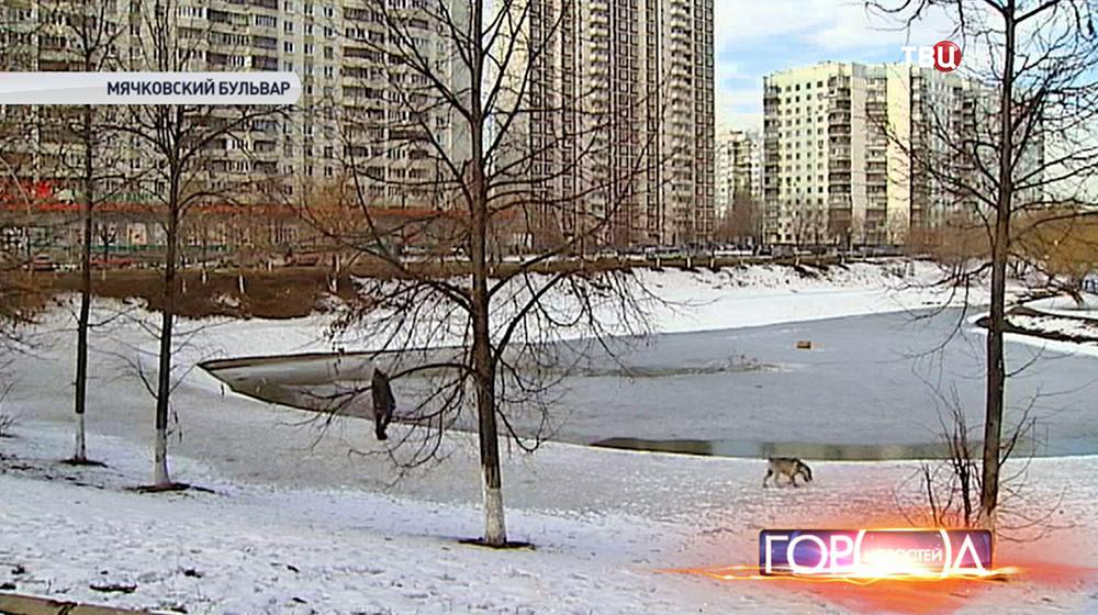 Пруд на юго-востоке Москвы