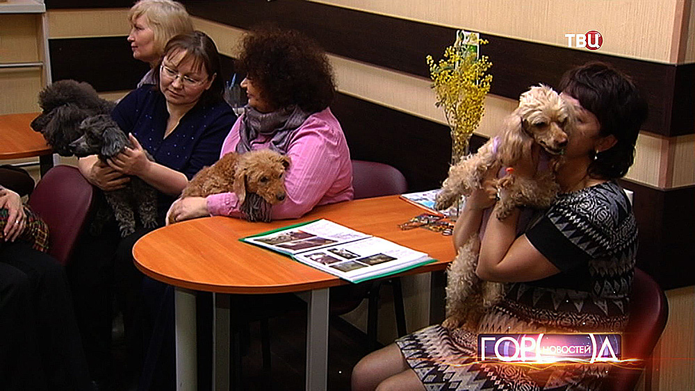 """Команда помощи для собак породы """"пудель"""""""