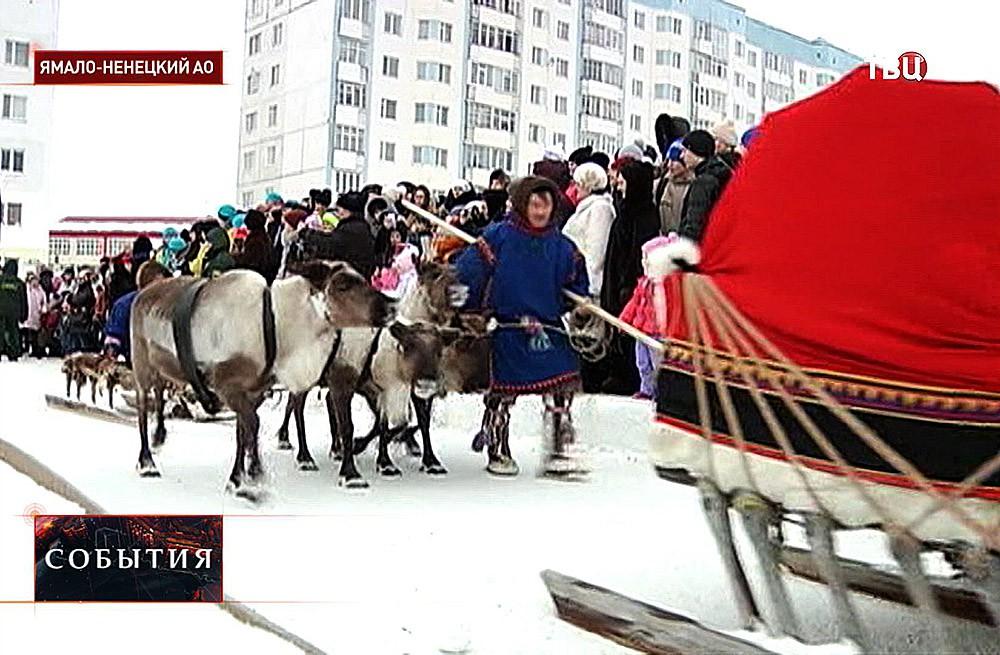 Соревнования оленеводов в Ямало-ненецкий
