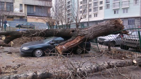 Дерево, упавшее на машину в результате штормового ветра
