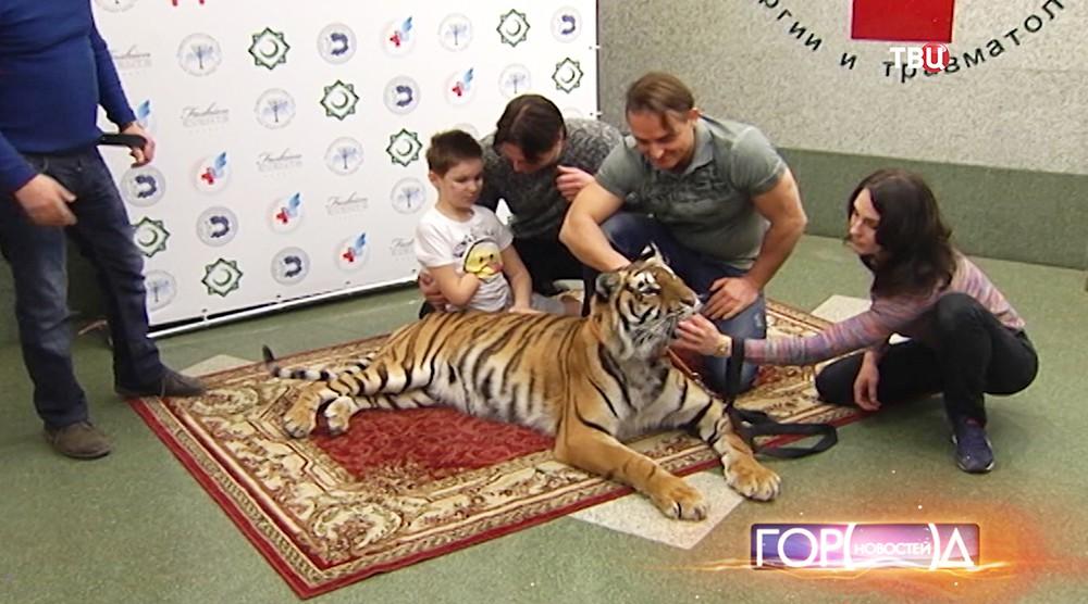 Тигр в НИИ Детской хирургии и травматологии