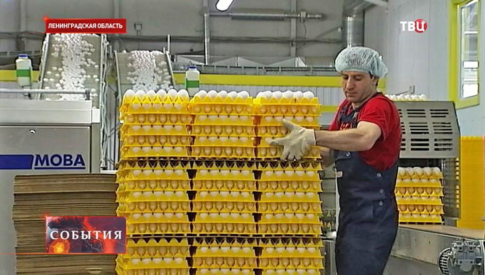 Упаковка яиц на птицеферме