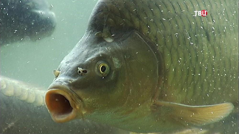 Живая рыба в магазине