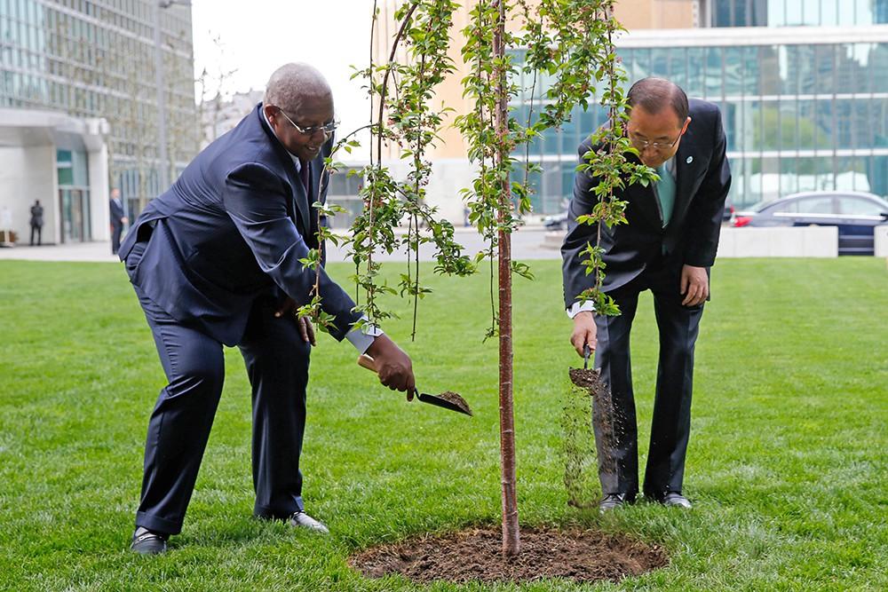 """Генеральный секретарь ООН Пан Ги Мун сажает """"дерево мира и единства"""" в честь 70-летия окончания Второй Мировой войны"""