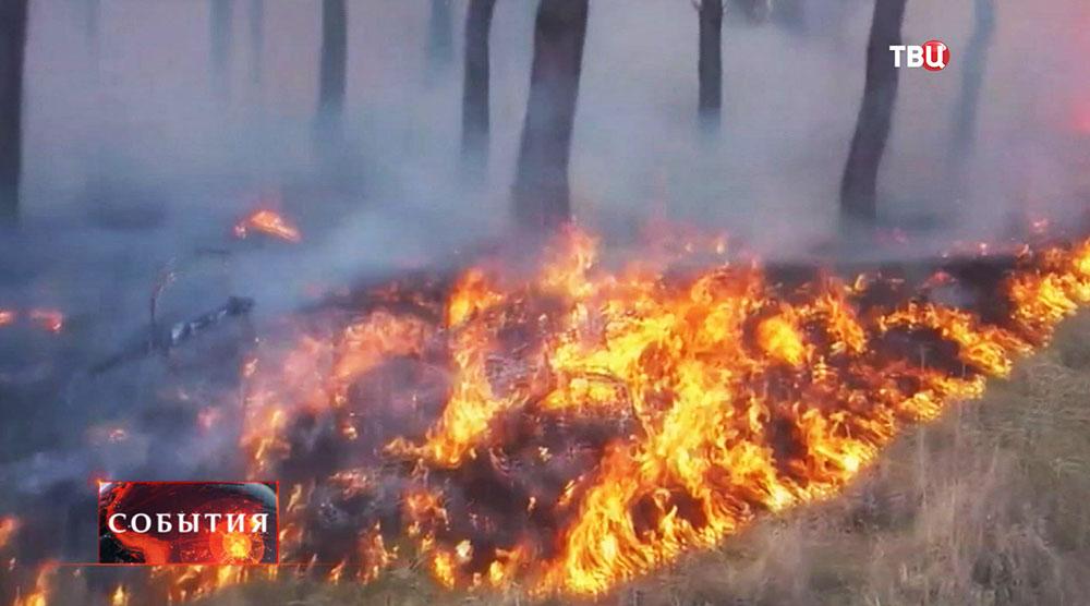 Лесные пожары в Забайкальском крае