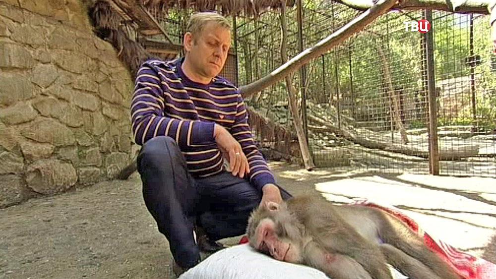 Инцидент с обезьянами в Ялтинском зоопарке