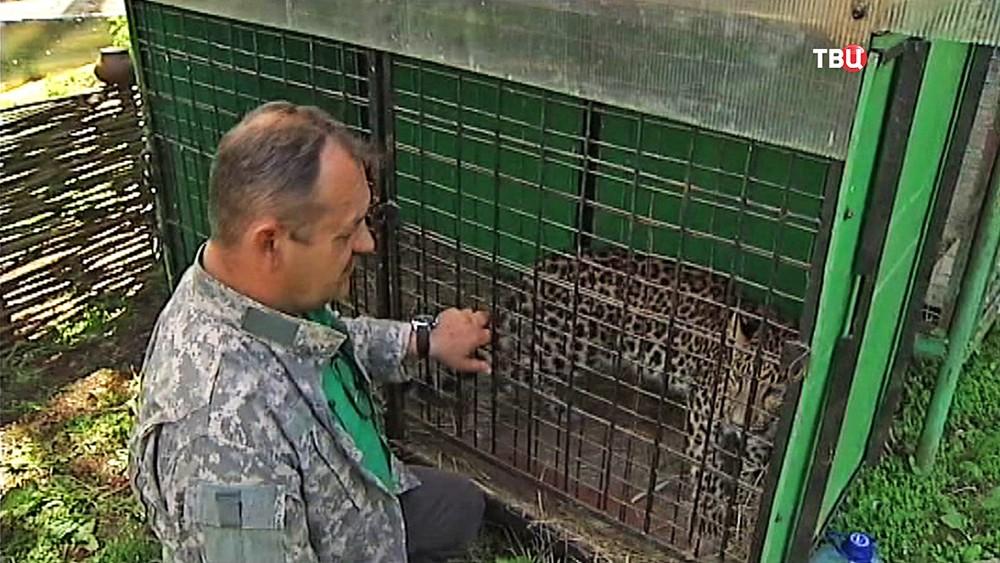 Леопарды в центре передержки диких животных