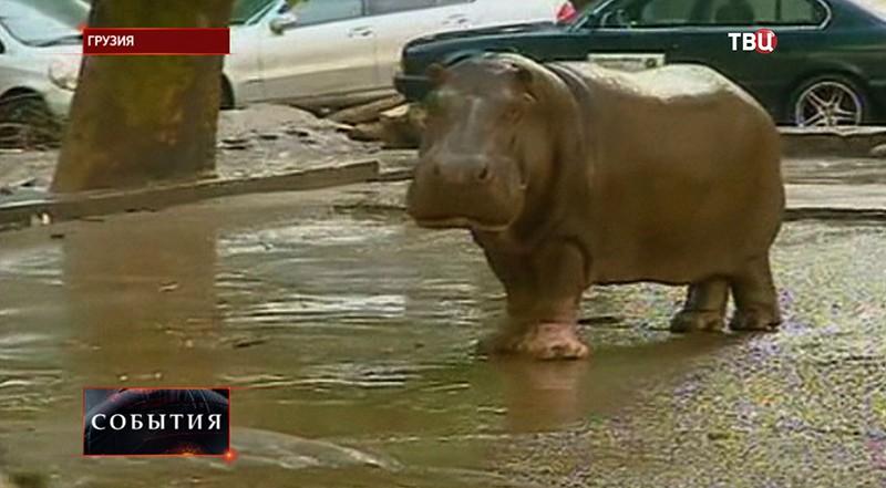 Последствие наводнения в Грузии