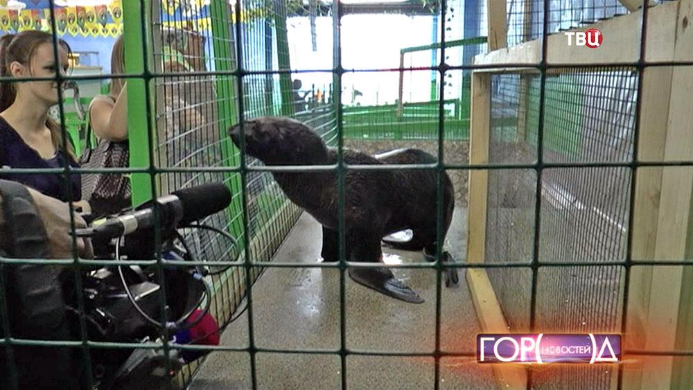 Морской котик в московском ТЦ