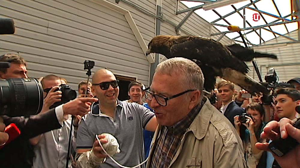 Орел на плече Владимира Жириновского
