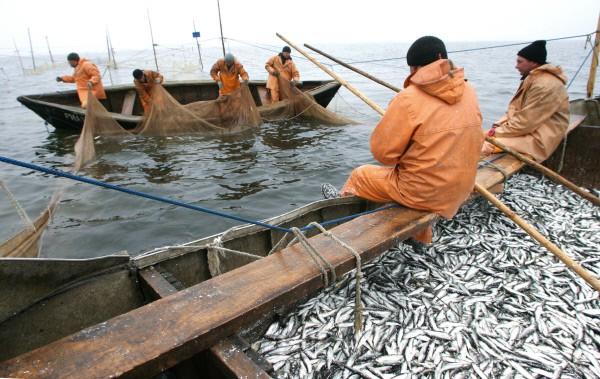 на что ловить рыбу в португалии