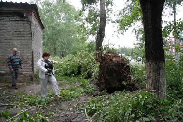 На улицах Томска повалены деревья после ураганного ветра