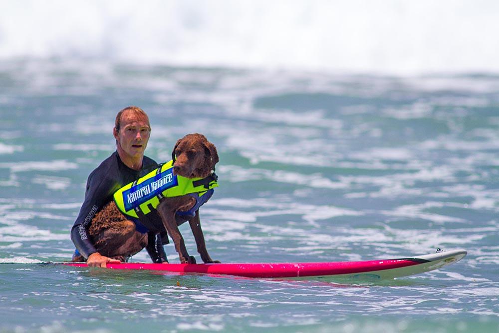 Соревнования по сёрфингу среди собак