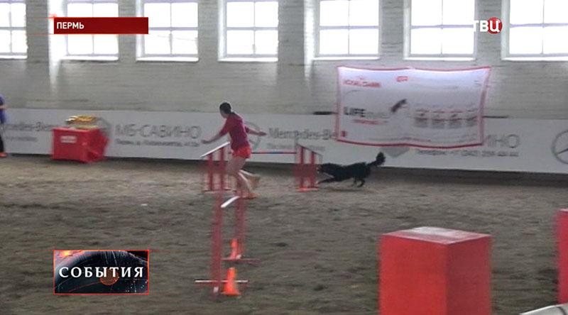 Юношеское первенство России по кинологическому спорту