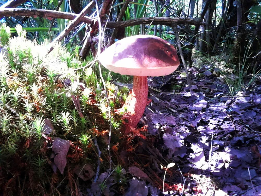 ядовитые грибы подмосковья фото и описание