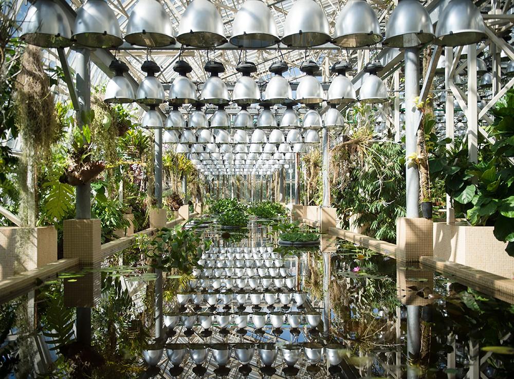 Оранжерея в одном из павильонов Центрального ботанического сада