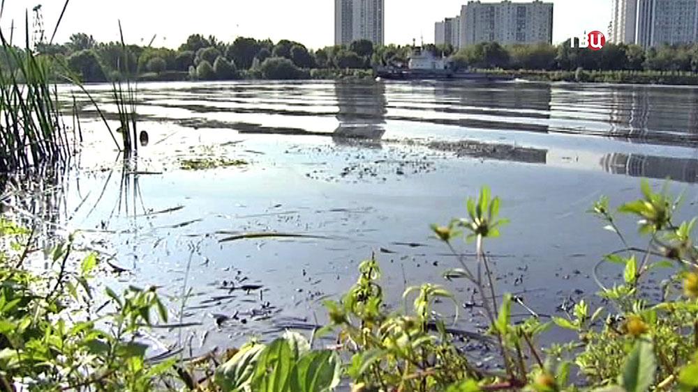 Берег Москва-реки