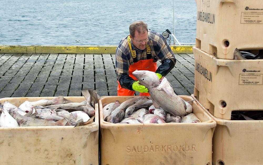 Исландские рыболовы