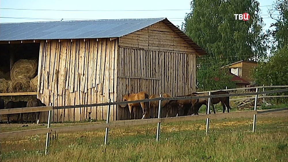 Коневодческая ферма