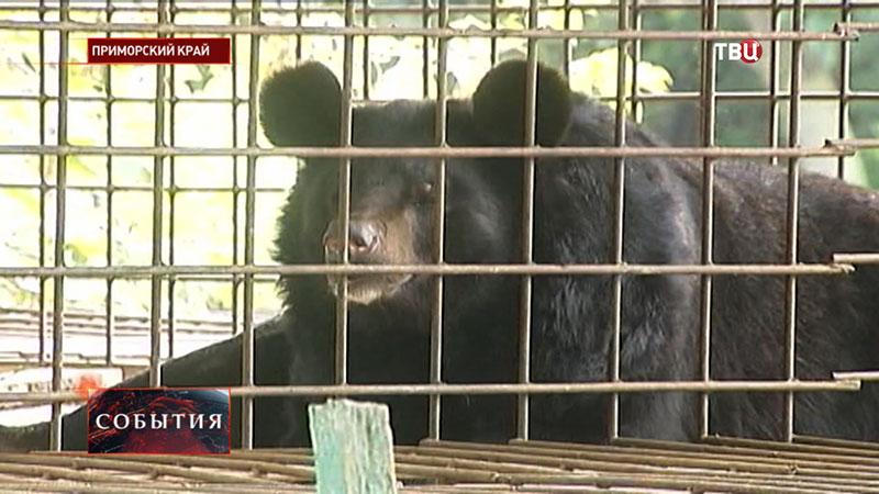"""Медведь в зоопарке """"Зелёный остров"""" города Уссурийска"""