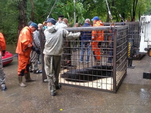 Затопленный зоопарк в Уссурийске