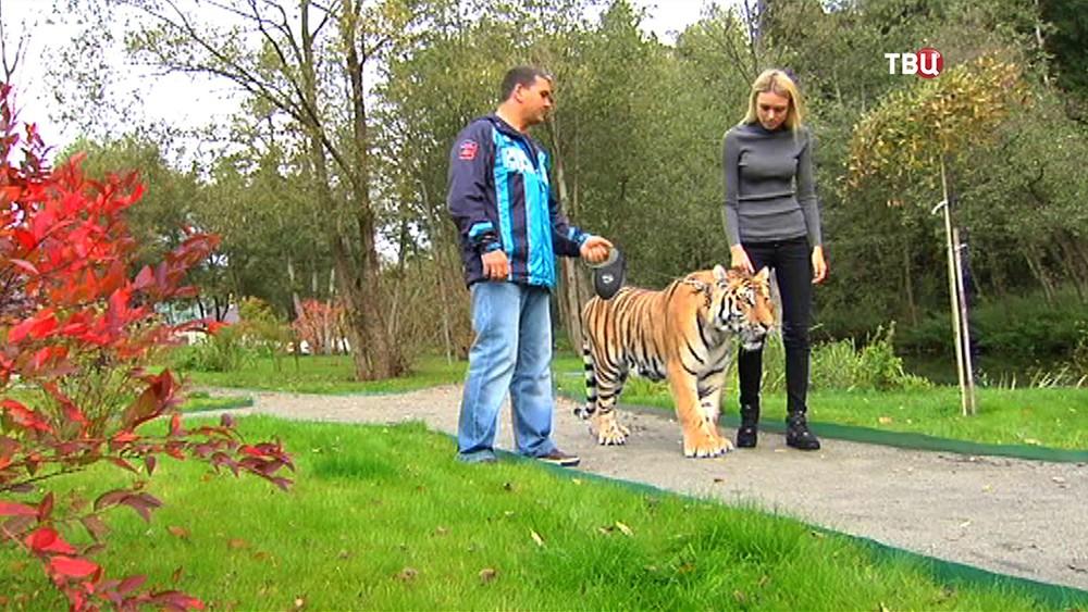 Мисс Мира Ксения Сухинова и тигр по имени Мир
