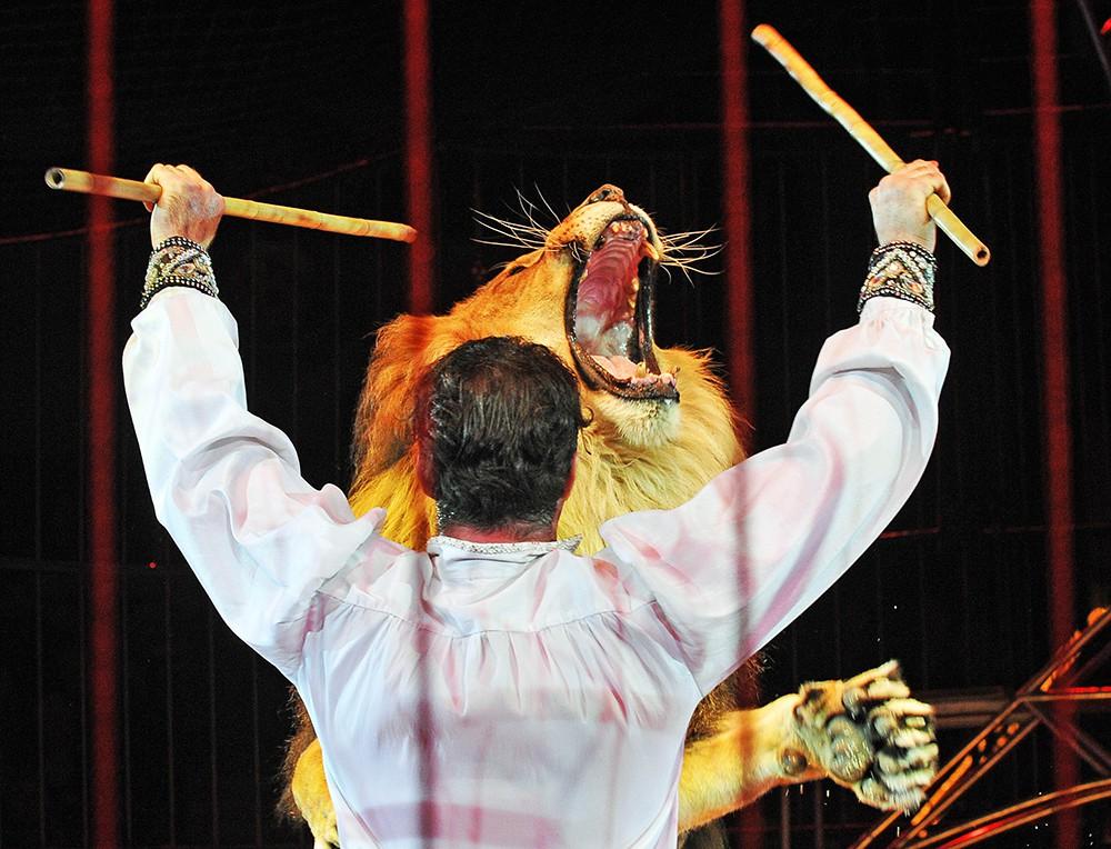 Дрессировщик львов в цирке