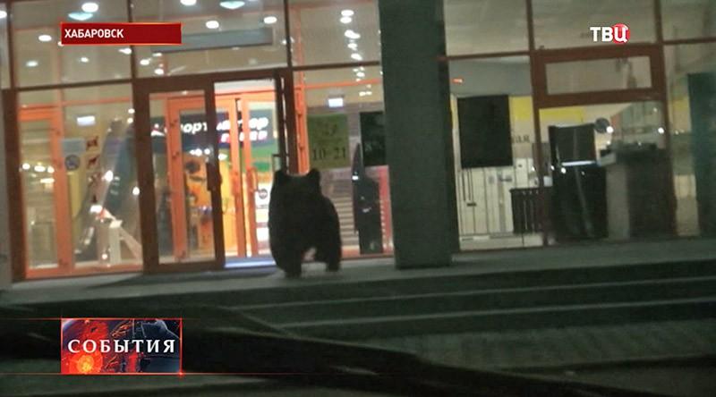 Медведь около входа в торговый центр