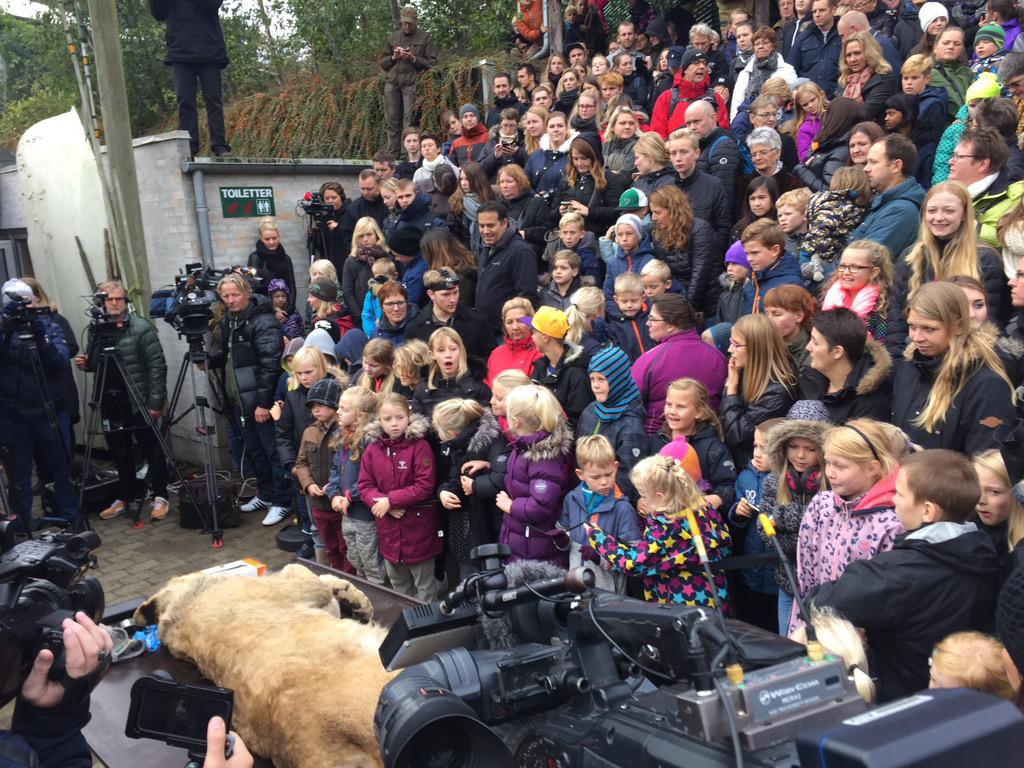Дети наблюдают шоу со вскрытием льва в датском зоопарке